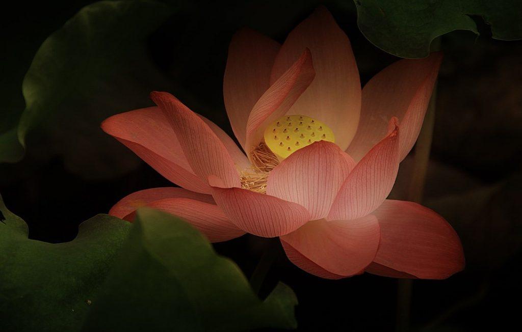 The Symbolic Lotus