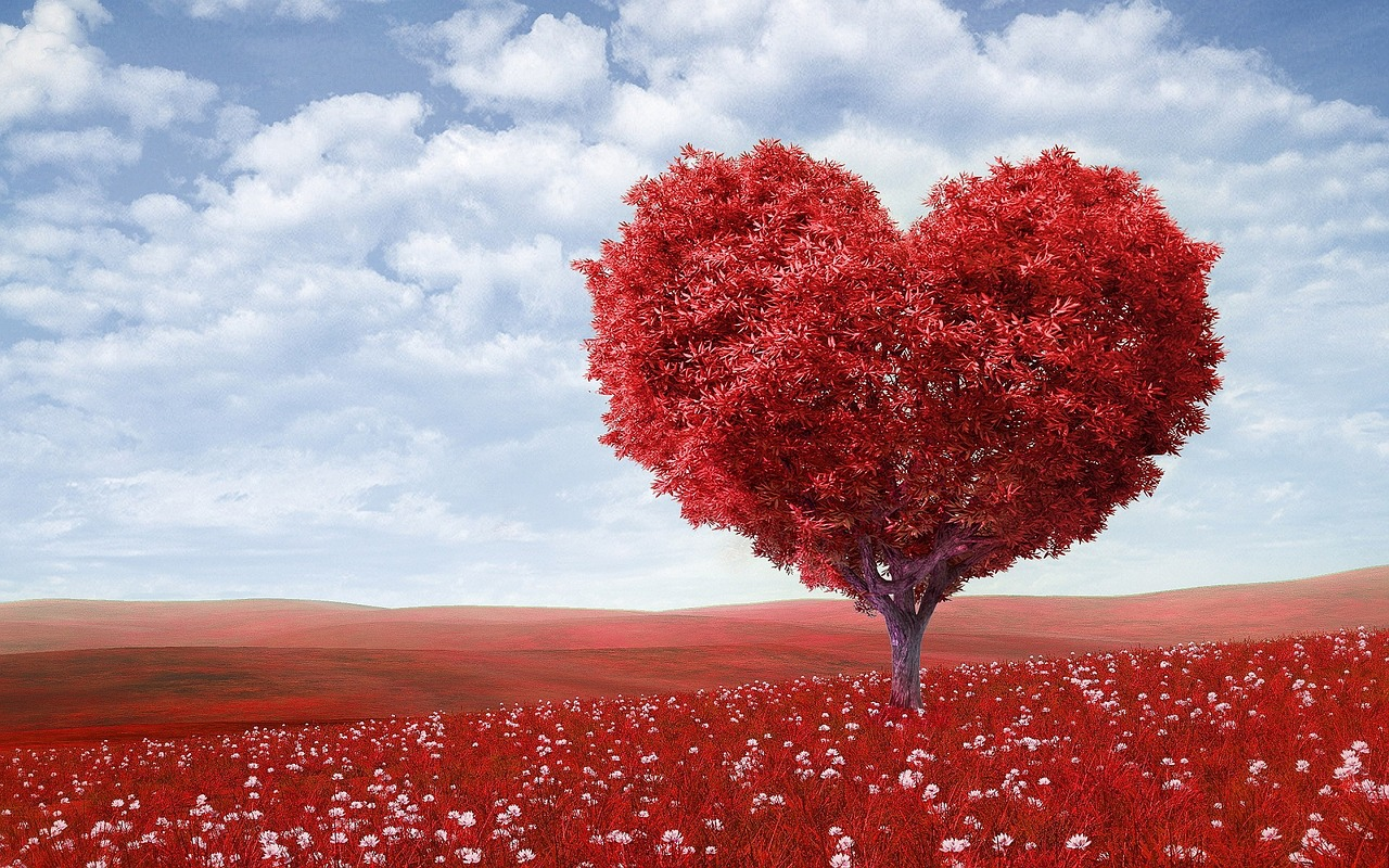 Your Hearts Destiny